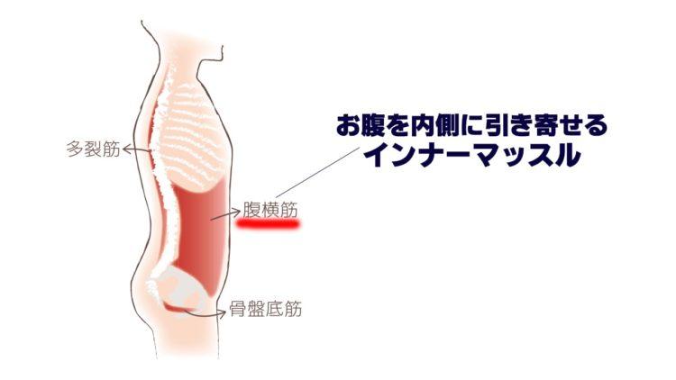 腹横筋の画像