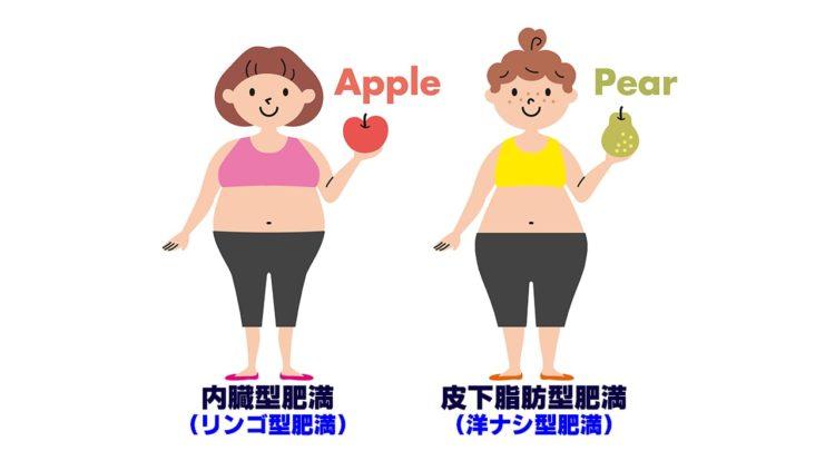 タイプ別肥満の画像